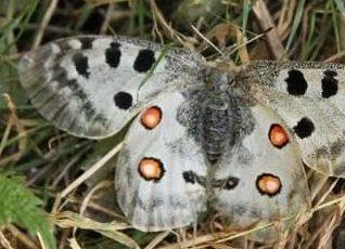 Volksbegehren Artenvielfalt startet am 31.12.2019